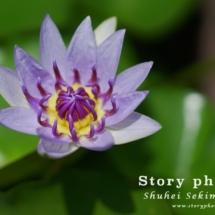 flower11