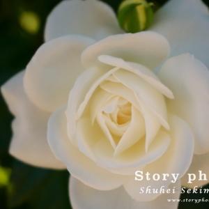 flower22