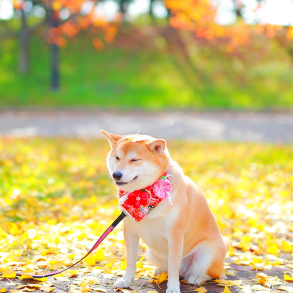 ペット撮影 犬 わんちゃん
